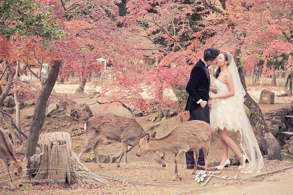 Rainbow & Luis (日本 婚紗攝影.December 2014)